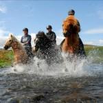 Icelandic horse in Skagafjordur Hotel North Iceland
